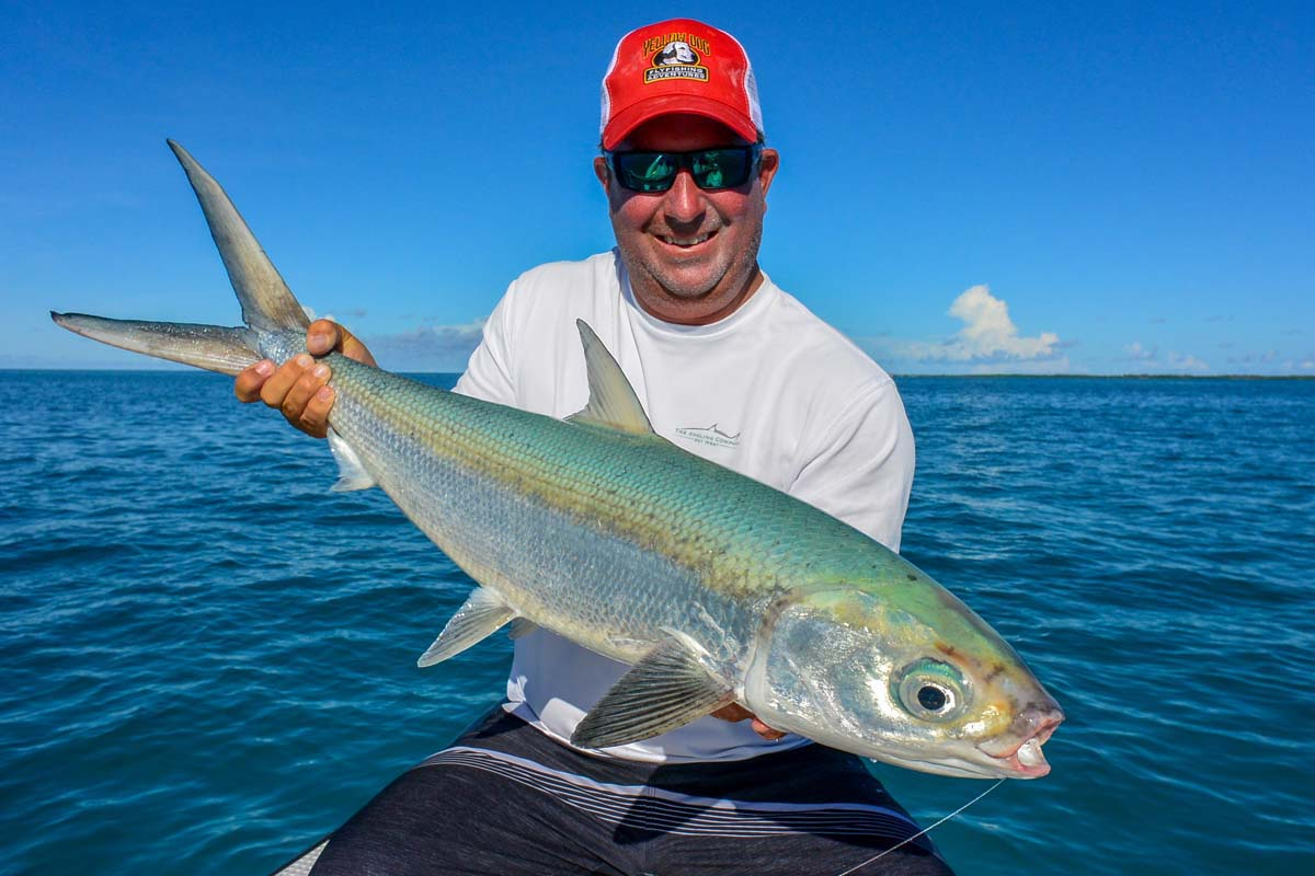 Fly fishing for milkfish chanos chanos facts flies for Fish co