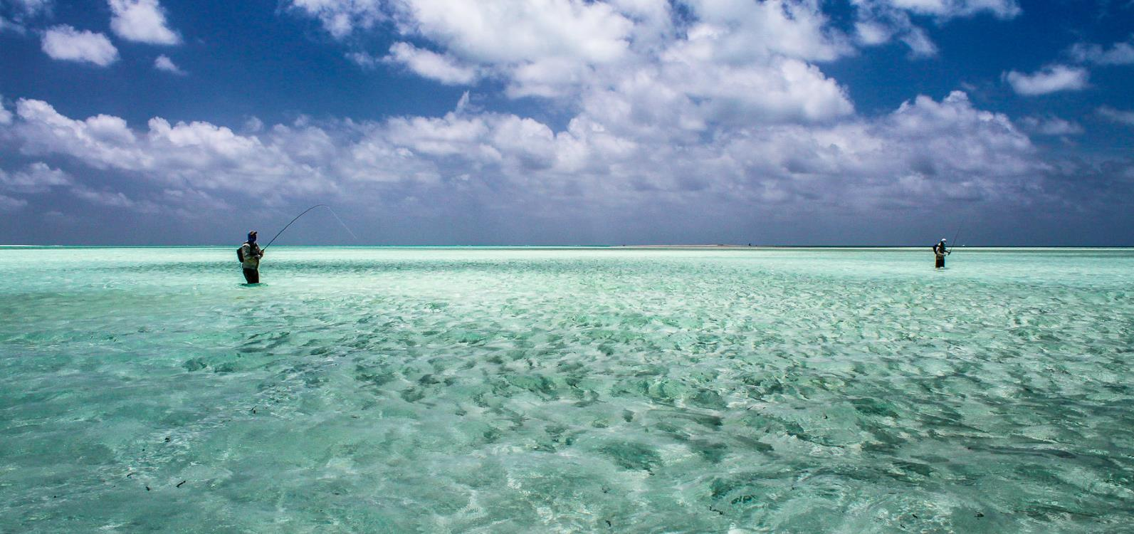Saltwater fly fishing at Alphonse Atoll - Guy fly fishing for bonefish (which is swimming everywhere)