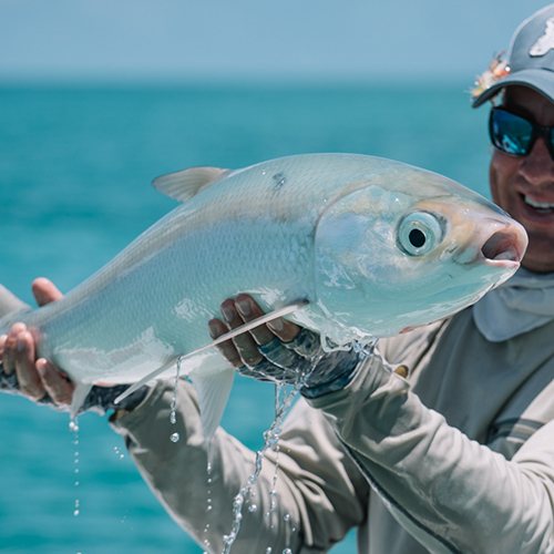 Fly Fishing For Milkfish (Chanos-Chanos)