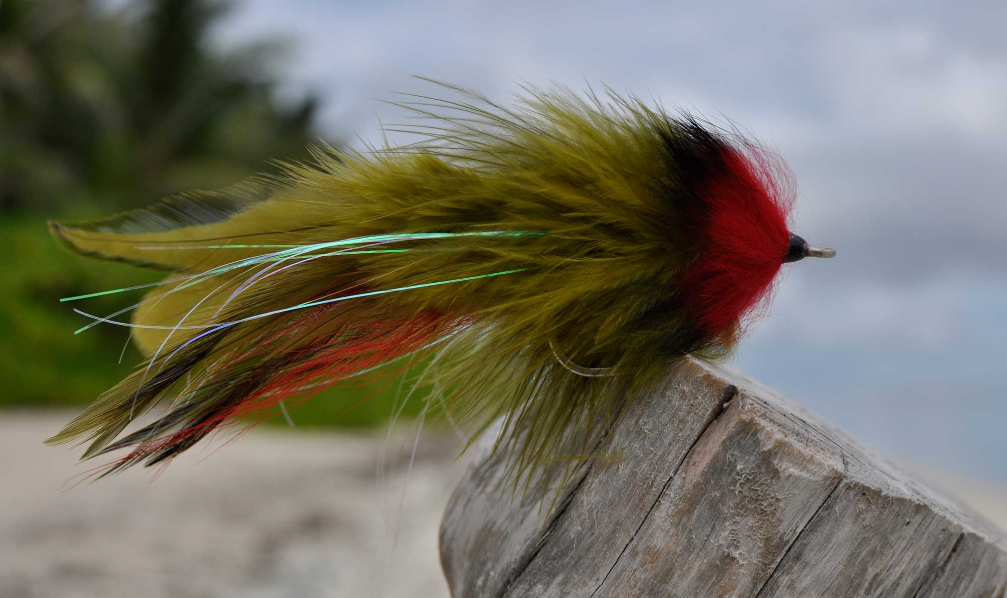 Barracuda-Olive-and-red-Semper