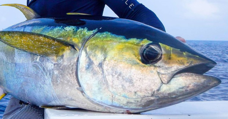 Yellowfin-Tuna-Face
