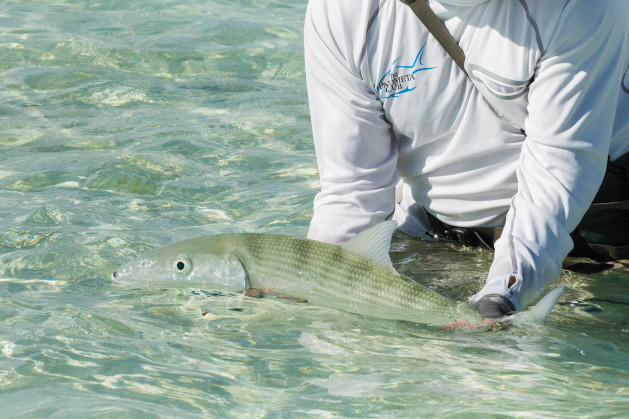 bonefish-on-the-fly